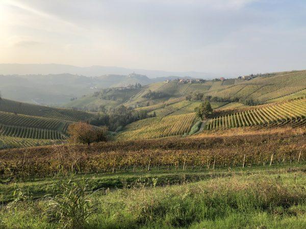 zicht op barolo wijngaard